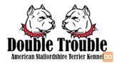 Mladički ameriški staffordshire terier - rodovniški terrier