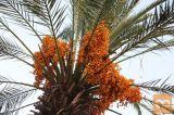 Safari program Po poteh Ali Babe in počitnice na otoku