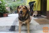 Oddamo psa v okolici Divače.