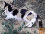 Mlade mačke